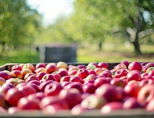 Asesoría empresas agrícolas
