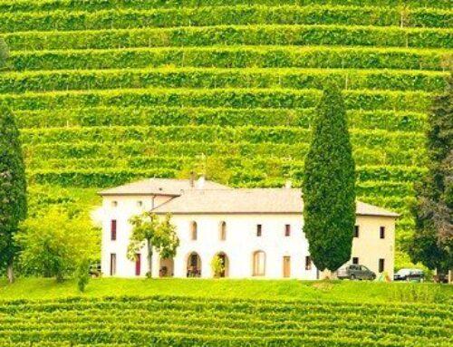 Asesores vitivinícolas: asesoramiento especializado en bodegas